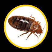 Elimination d'insectes en Ile de France