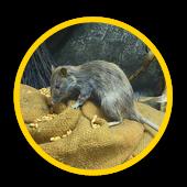 Service d'extermination de souris IDF