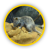 Entreprise extermination de rats IDF