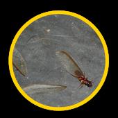 L'extermination de termites en Ile de France